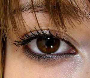 300px-Brown_eyes[1]